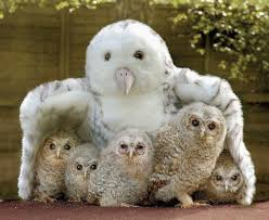 motherhood-owls